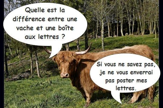 Blague vache - Photo de vache drole ...